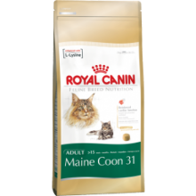 Royal Canin Maine Coon 31 kassitoit, 4 kg