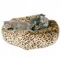 Kassi magamiskoht leopardi mustriga